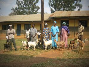 GOAT-REARING-IN-EASTERN-UGANDA