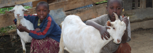 cabra-uganda