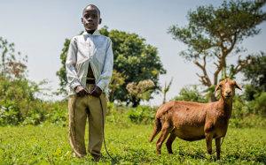 Allevamento capre in Uganda