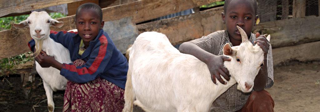 Regala capre per i bambini in Uganda