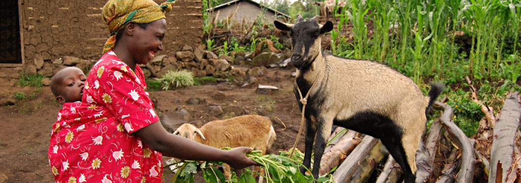 Capre per le famiglie in Uganda